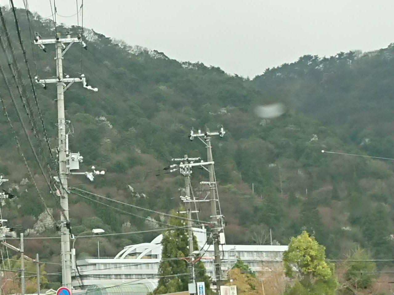 射場山・愛宕山 タムシバ 過去の様子です