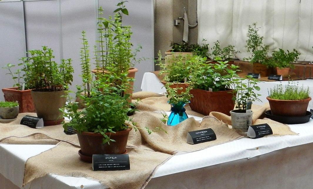 香りの植物展昨年の様子