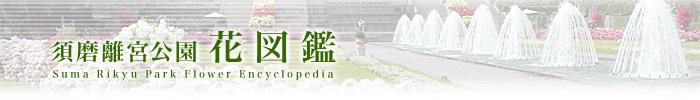 스마리큐공원 꽃 도감