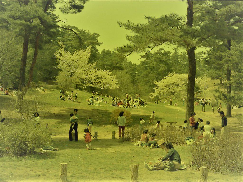 1979年(昭和54) 長谷池芝生広場景観