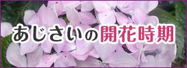 あじさいの開花時期(平成)