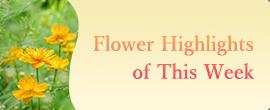 Flower Highlights of This Week